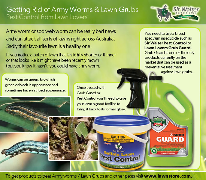 Army Worm and Lawn Grub Control from Lawnstore.com.au