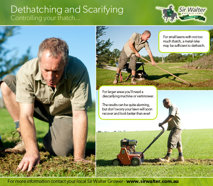 Dethatching / Scarifying your Lawn