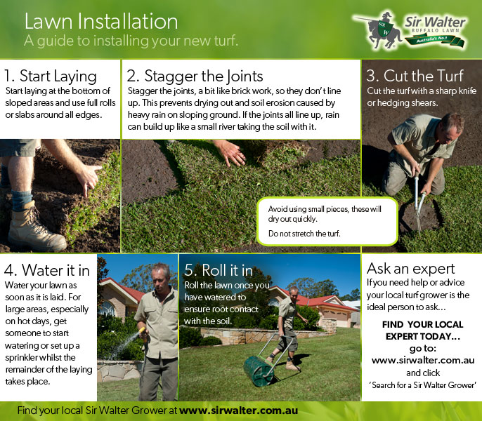 Lawn installation laying lawn care advice from for Care for new sod