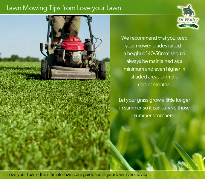a height of 40-50mm should always be maintained as a minimum and even higher in shaded areas or in the cooler months.