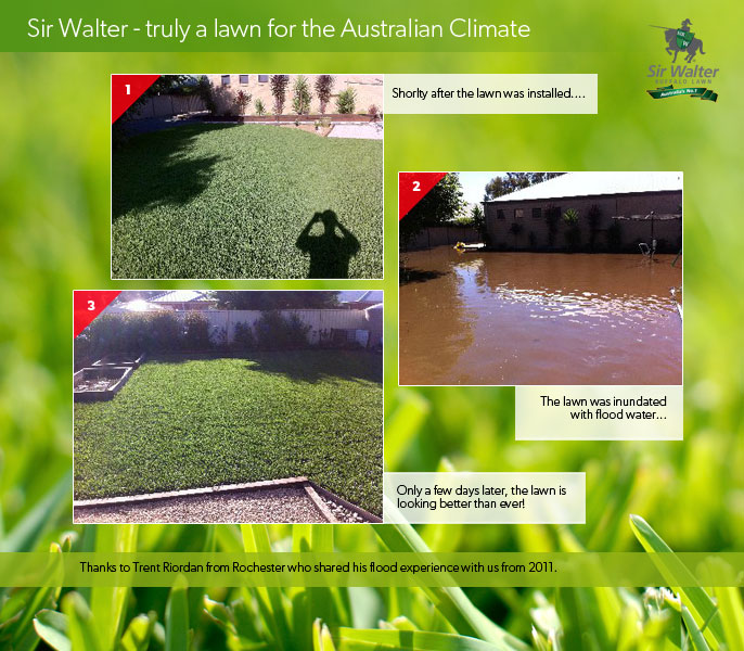 Sir Walter copes in all Australian weather! Truly a lawn for the Aussie environment.